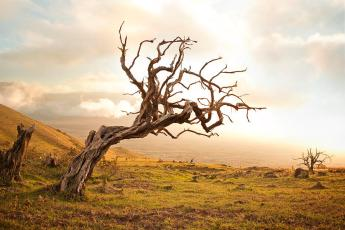 dead-tree-on-the-sunset-caterina-bernardi